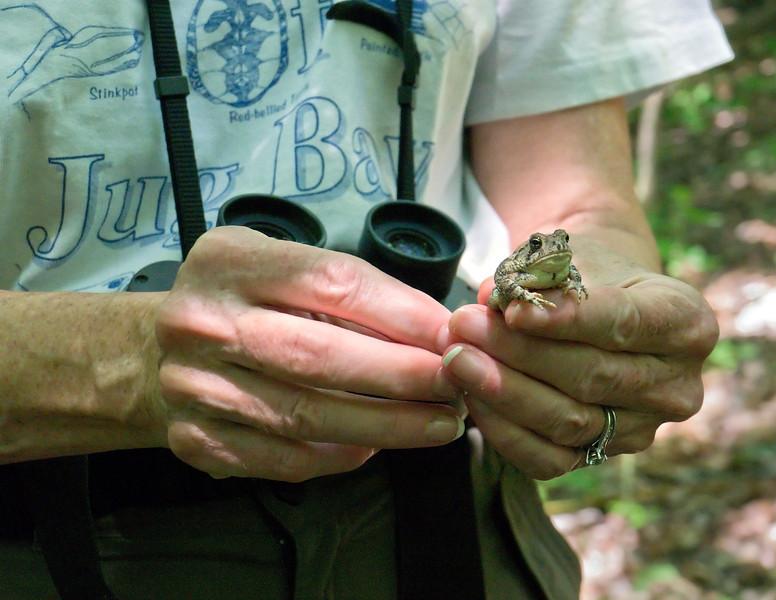 Naturalist shares Fowler's toad <br /> Jug Bay Wetlands Sanctuary, Lothian, MD