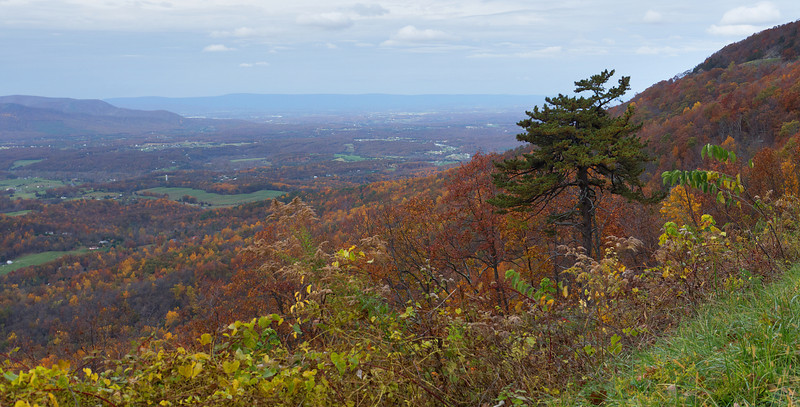 Autumn along Skyline Drive<br /> Shenandoah National Park, VA