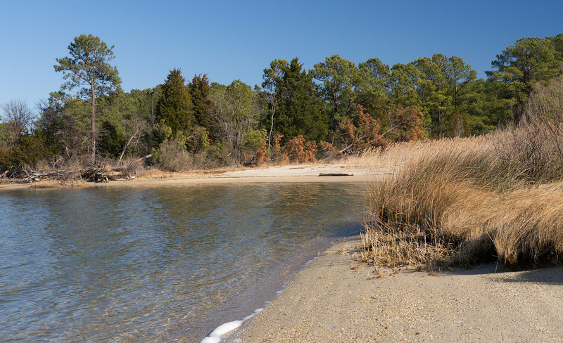 Pines and reeds along Lake Conoy<br /> Point Lookout State Park, Scotland, MD