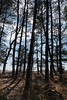 Sun through the pines by the Potomac River<br /> Point Lookout State Park, Scotland, MD