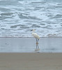 Snowy egret on Pacific Beach<br /> San Diego, CA