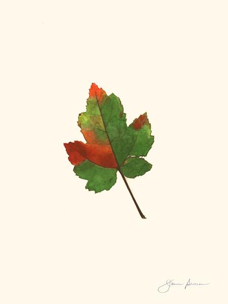 "<i>Maple Leaf</i>  (2015) Watercolor &amp; colored pencil - 9"" x 12"""