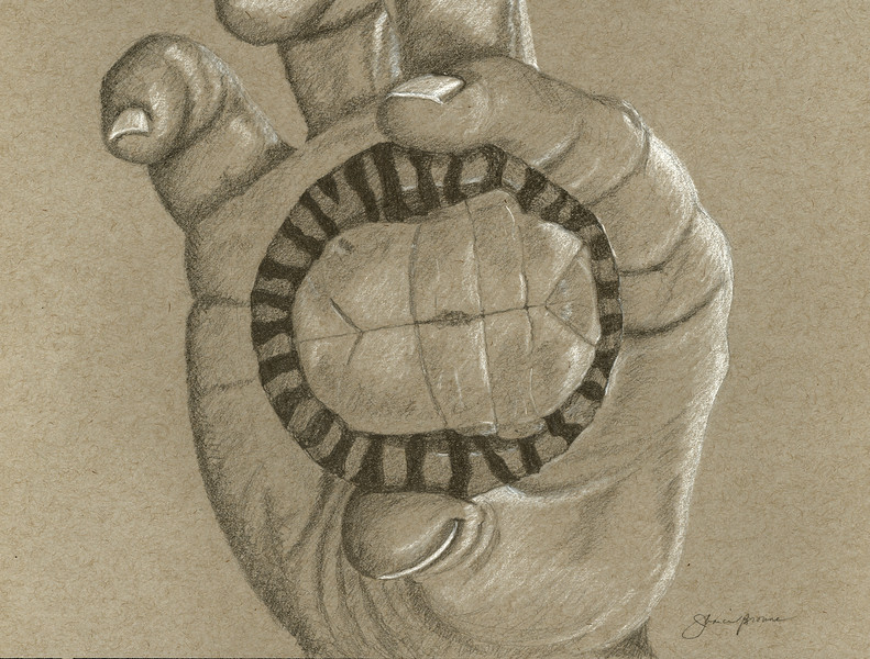 """<i>Baby Snapping Turtle</i>  (2014) Graphite &amp; white charcoal on toned paper - 9"""" x 12"""""""