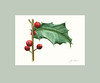 "American Holly - Watercolor<br /> 5"" x 7"" (excluding mat)"