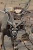 ClovedCreatures (1)