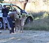 Cheetah_Botswana (63)