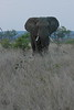Elephant (74)