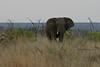 Elephant (27)