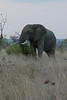 Elephant (69)