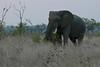 Elephant (31)