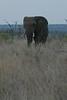 Elephant (28)