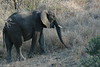 Elephant (44)