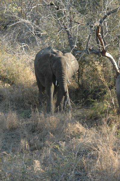 Elephant (33)