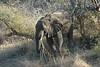 Elephant (39)