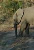 Elephant (60)