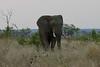 Elephant (73)