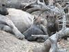 HyenaDen (3)