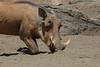 Warthog (28)