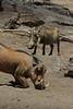 Warthog (29)