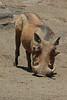 Warthog (32)