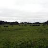Waterbuffalo, iSimangaliso Wetland Park