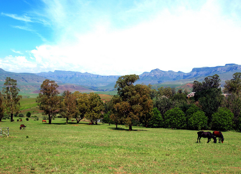 Horses, Montusi Mountain Lodge