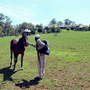 Shadrack, our guide, greets a Montusi horse