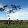 Phinda Reserve scene
