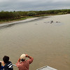 Looking at the hippos, St. Lucia Estuary