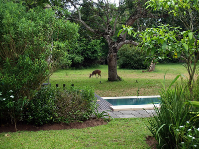 Serene Guesthouse, St. Lucia, November 23 and 24