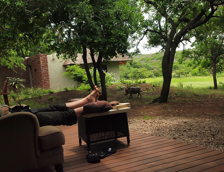 A warthog pays a visit