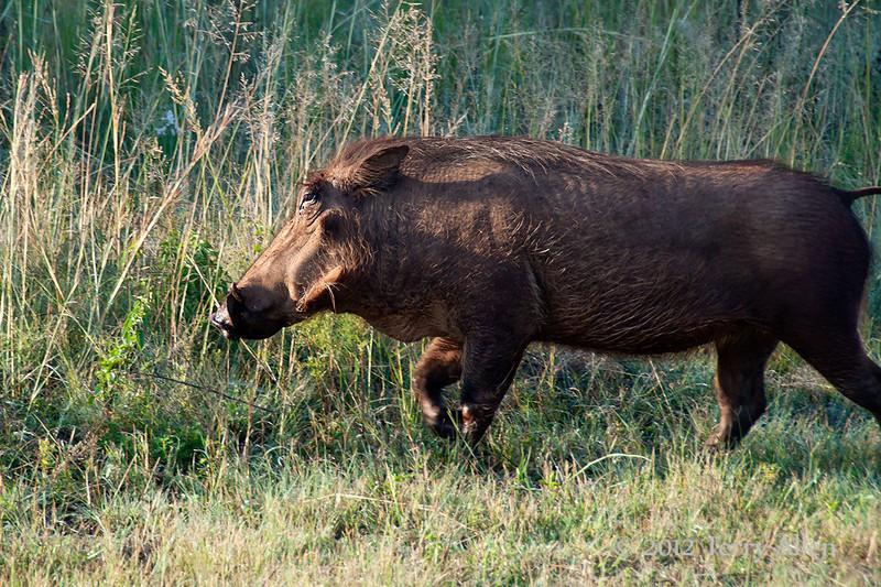 Warthog-2