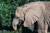 Baby-elephant-by-tree