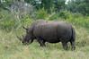 White-rhino-&-tick-birds-3