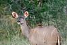Kudu-on-alert
