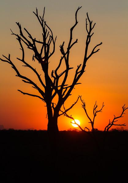 Sunset, MalaMala