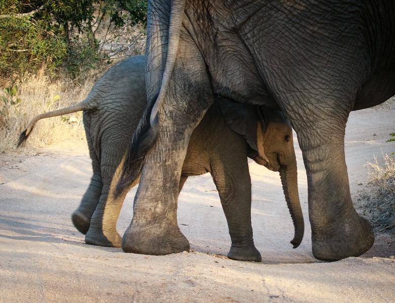 Baby elephant security
