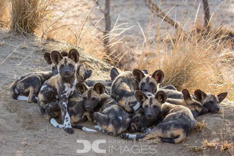 Pile of Pups