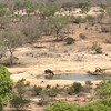 Rhino at Watering Hole