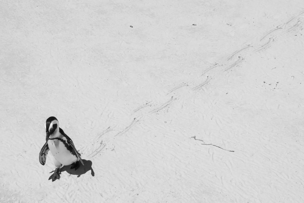 Penguin trail