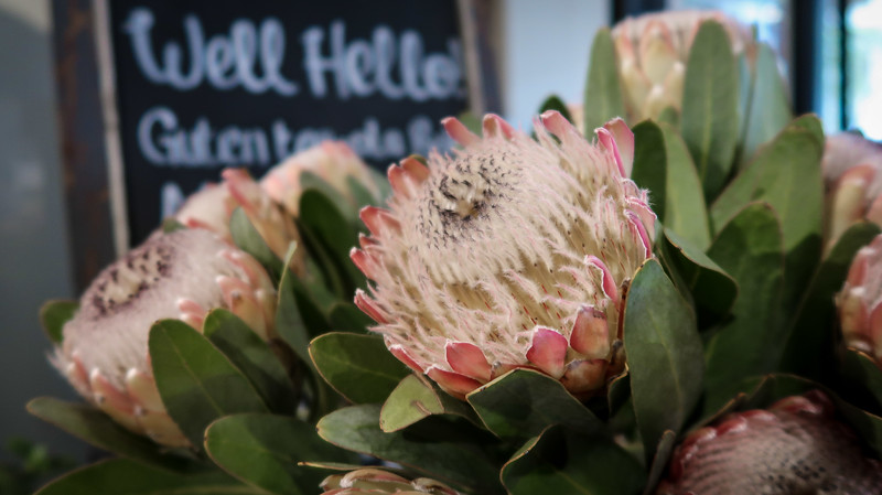 Blooms at De Warenmarkt