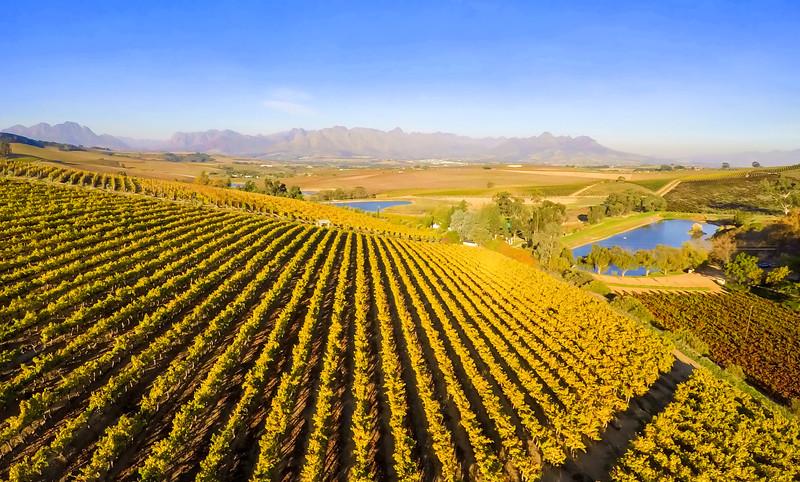 Winery hopping in Stellenbosch