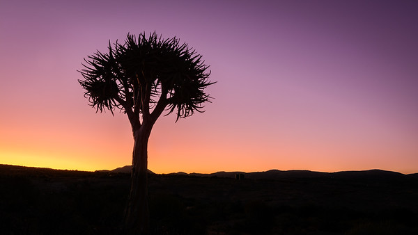 Kokerboom, Springbok, Northern Cape