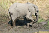 El;ephant_Mud_MalaMala_2019_South_Africa_0006