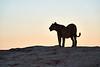 Lions_MalaMala_2019_South_Africa_0015