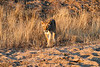Lions_MalaMala_2019_South_Africa_0049