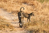 Leopard_Cubs_MalaMala_2019_South_Africa_0006
