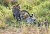 Leopard_Cubs_MalaMala_2019_South_Africa_0046