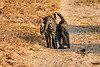 Leopard_Cubs_MalaMala_2019_South_Africa_0004