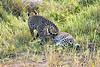 Leopard_Cubs_MalaMala_2019_South_Africa_0045